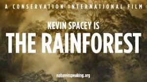WM (1) Rain Forest