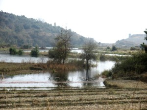 WM Rising water level of Mapithel Dam submerging agriculturre   land in Louphoung Village