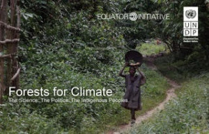 Forests For Climate