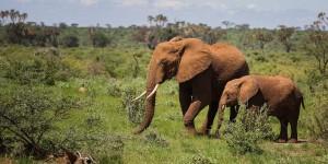 World Elephants Day Clinton Foundation